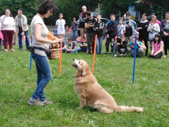 Mazsi - családi kutyasuli - Pécs